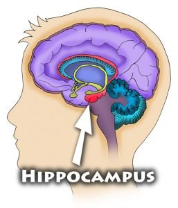 hippocampus peppermint Peppermints Makes The Kids Smarter and Calmer hippocampus 96