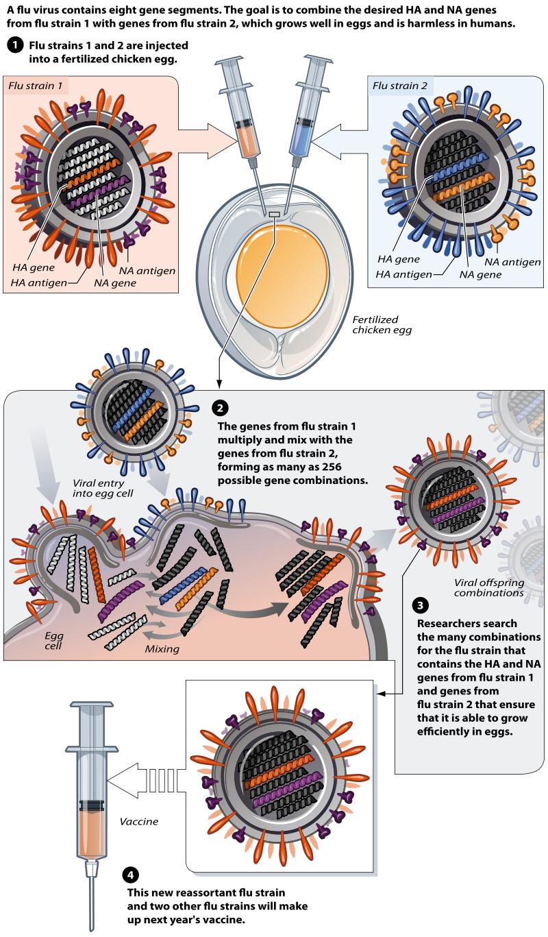 School Nurse Guide Flu Influneza School Nurse Flu Season Survival Guide Flu Virus Egg Vaccine